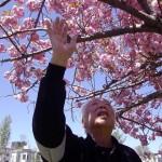 5月 桜の木の下で