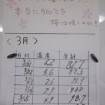 12.最高気温合計500℃で桜は咲くかな?