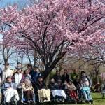 2017.5.2 農試公園お花見✿