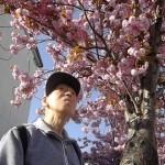 4.八軒の桜「とても綺麗な桜ですね。」