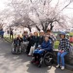 2018.5.3 農試公園お花見
